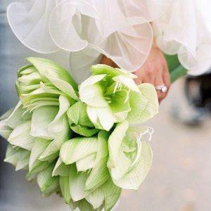 グリーンのアマリリスと白い花嫁💖