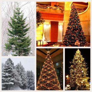 クリスマスのお話し🎄クリスマスツリー