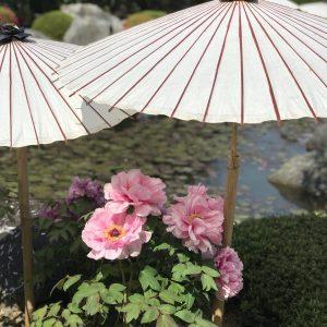 てくてく花散歩❀ぼたんの當麻寺
