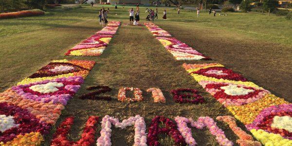 Flower Festa ダリアの花絨毯